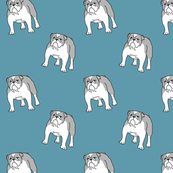 Bulldog teal
