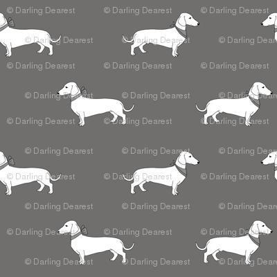 dachshund_gray