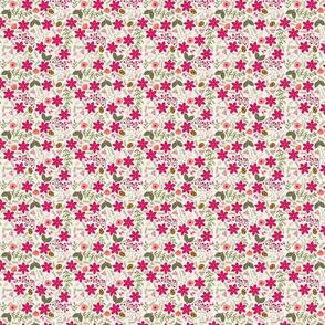 Poinsettia_flower_fond__cru_S