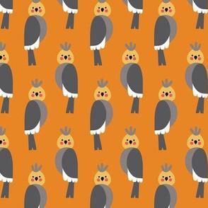 Cockatiels in orange