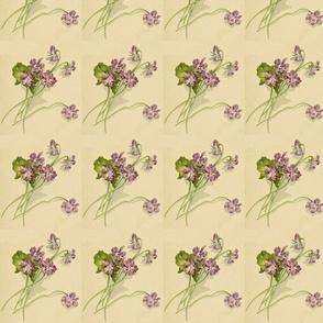blue-violets