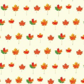 Bright Fall Leaves (1)