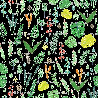 Monstera botanical