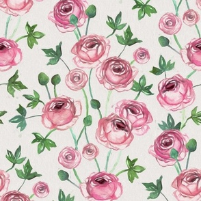 Painted Pink Ranunculus on Cream