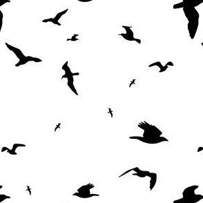 Ravens Black and White