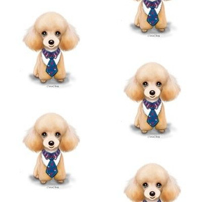Miniature Poodle Teddy M