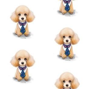 Miniature Poodle Teddy M