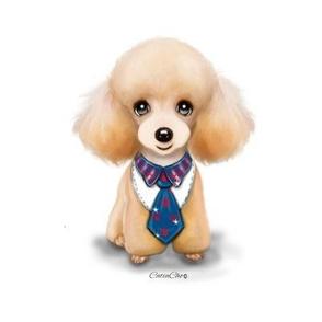 Miniature Poodle Teddy L