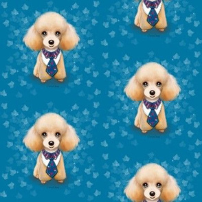 Miniature Poodle Teddy Blue M