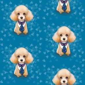 Miniature Poodle Teddy Blue M