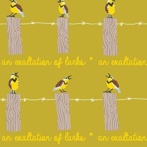 EXALTATION of larks 3