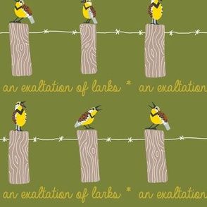 EXALTATION of larks 4