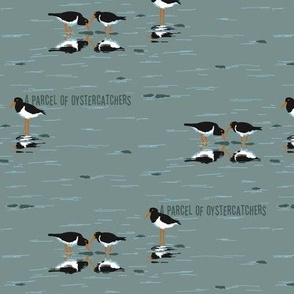 PARCEL of oystercatchers 2