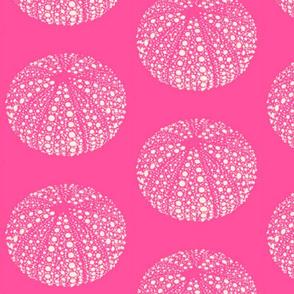 Urchin pink