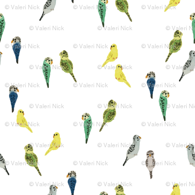 tiny budgies