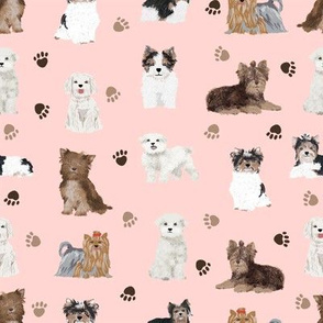 chocolate yorkie, biewer terriers, maltese dogs fabric cute toy dogs fabric toy breeds dogs