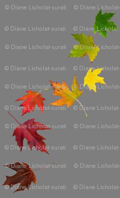 Rainbow Maple Leaves on Grey