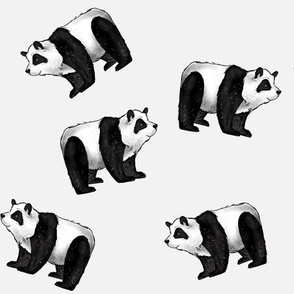 Pandas Everywhere!