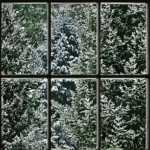 Watching the Pines through the Window