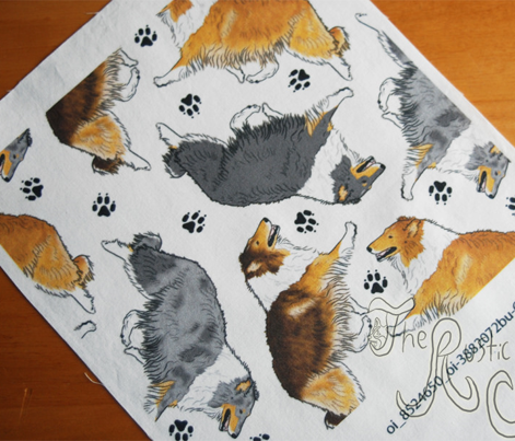 Trotting rough coated Collies and paw prints - white