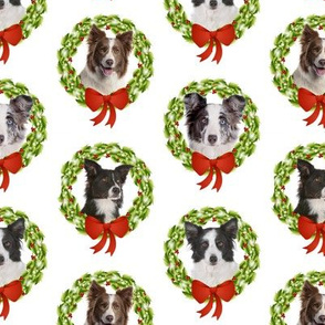 Border Collie Christmas