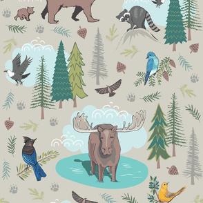 Wild Adventures - Little Bear Behind