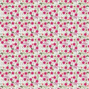 Poinsettia_flower_fond_bleu_S