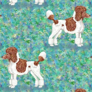Brown Parti Poodle on Blue Green