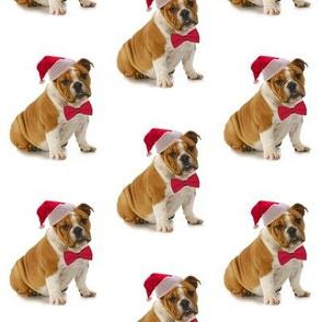 Santa Bulldog