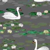 Swans Swimming in a Lily Pad Pond