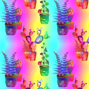 GARDENING RAINBOW CACTUS FERN FLOWERS POTS