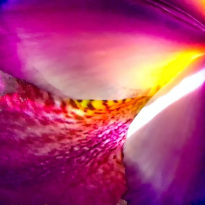 Vivid Iris Two - yardage