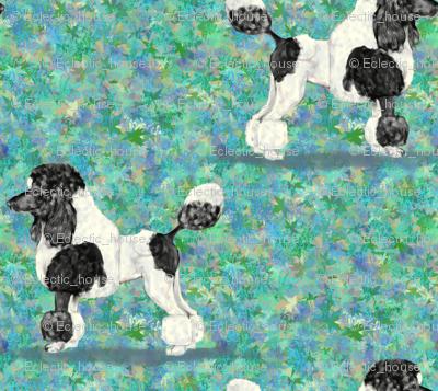 Black Parti Poodle on Blue Green