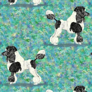 Black Parti Poodle on Blue Green