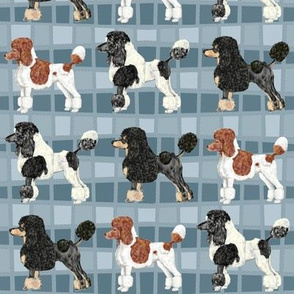 Fancy Poodles on Parade