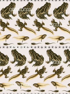 Frog Lifecycle Stripes