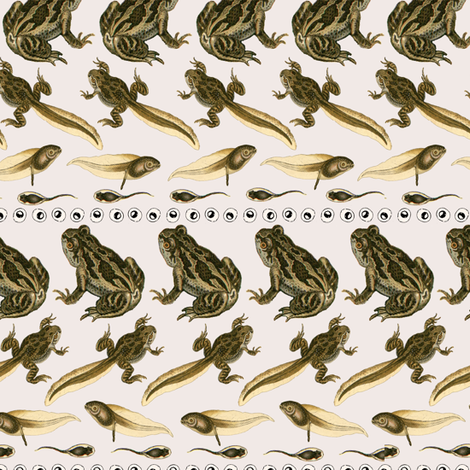 Frog Lifecycle Stripes fabric by thescientifichome on Spoonflower - custom fabric