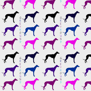 Colored Greyhounds