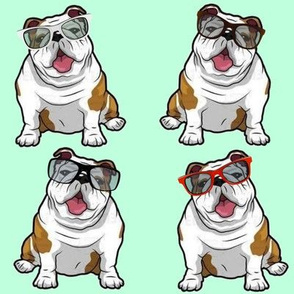 Bulldog Cool