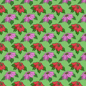 pink_and_red_poinsettias_on_green