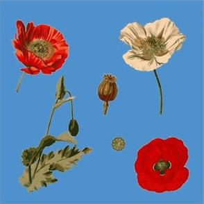 Poppies 2016