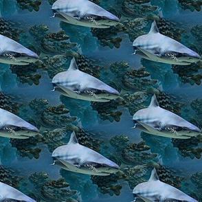 a shark named bruce