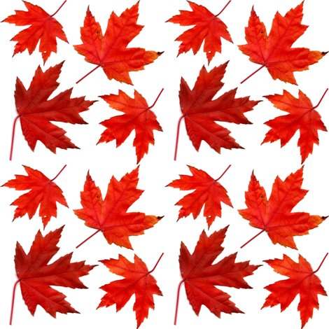 R4_sugar_maple_leaves_shop_preview