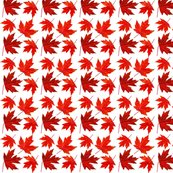 R4_sugar_maple_leaves_shop_thumb