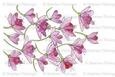 Pink Fuchsias