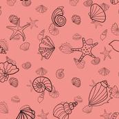 shells - coral