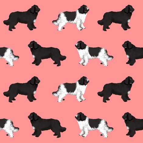 newfoundlands dog fabric cute dogs design newfoundland dog black and landseer dogs fabric by petfriendly on Spoonflower - custom fabric