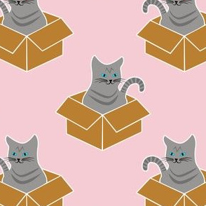 Grey Tabby In a Box on Pink