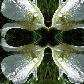 Mariposa Dew Pattern Play