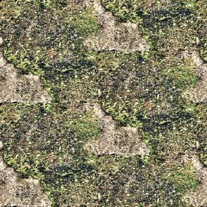 Moss and Concrete Design